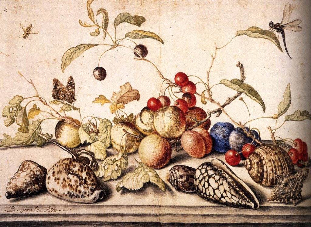 AST, Balthasar van der Still-Life with Plums, Cherries, and Shells c. 1628